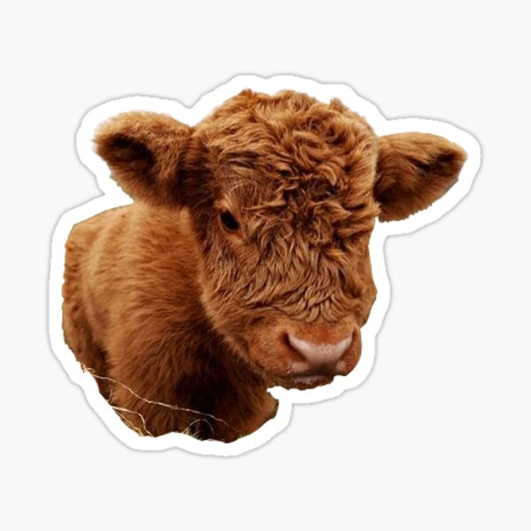 Fluffy Cow Sticker