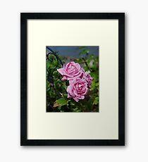 Autumn Roses Framed Print