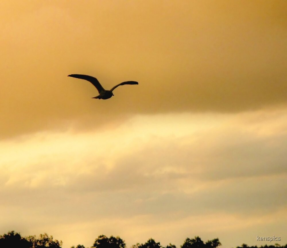 Seagull in Flight - for George  by kenspics