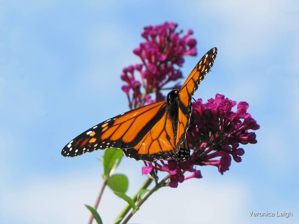 Monarch by Veronica Schultz