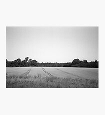 Lauki, Tukuma novadā   Field, Tukuma district Photographic Print