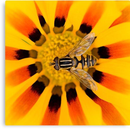 Summer Stripes by Sarah-fiona Helme
