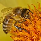 Pollination 38 by Gareth Jones