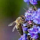 Bee Macro by Ross Jardine