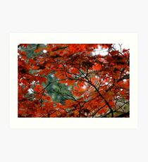 Red Leaves on a Fall Morning Art Print