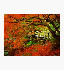 Tranquil Maple Photographic Print
