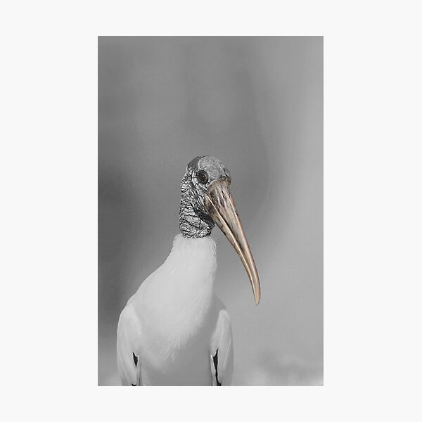 Standing Stalk Photographic Print