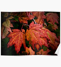 It's Show Time ~ Vine Maple ~ Poster