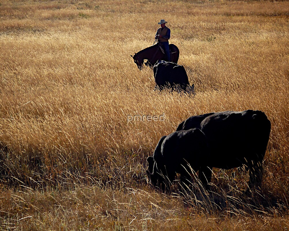 Passin' Through The Tall Grass by pmreed