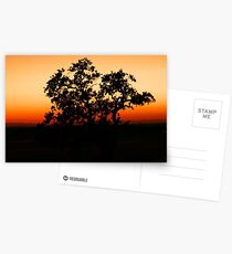 One tree at a time.... Postcards