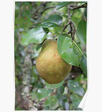 Bosc Pear study 1 Poster