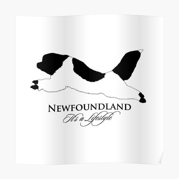 Landseer Newfoundland - It's a Lifestyle Poster