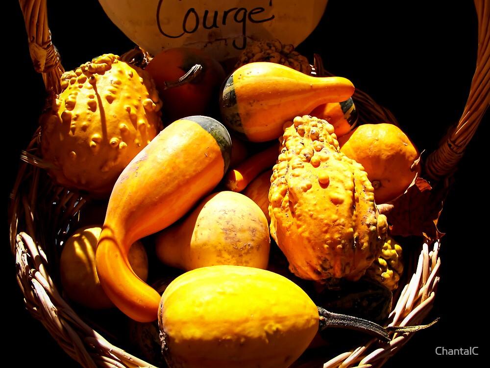Vignette Photo of Decorative Gourds in a Wicker Basket - Fall Season w/ Autumn Colours  by Chantal PhotoPix