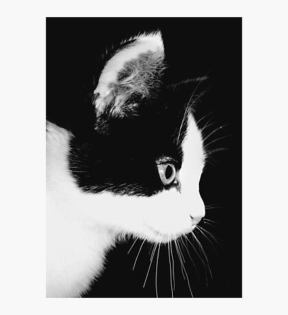 Kitteness Photographic Print
