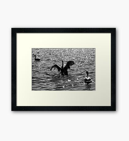 Testing His Wings Framed Print