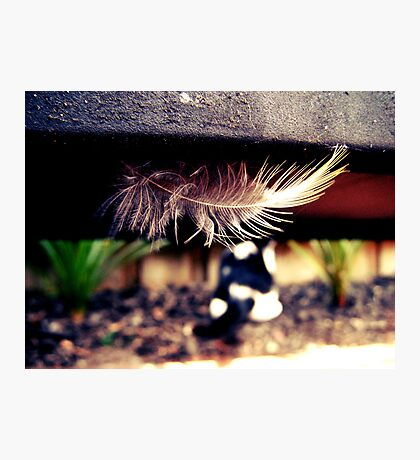 The Cat and The Feather Photographic Print