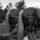 Belgian Butts In  Black & White by jodi payne