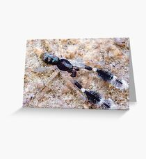 Tiny Ground Hunting Spider Greeting Card