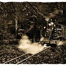 Bush Train by Peter Hammer