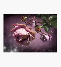 Dusky Pink Roses Photographic Print
