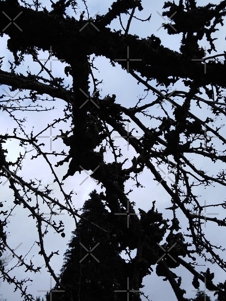 Winters Crab Apple Tree by MikeHawkinWorld