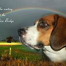 Sympathy Card For Loss Of Pet by Eve Parry