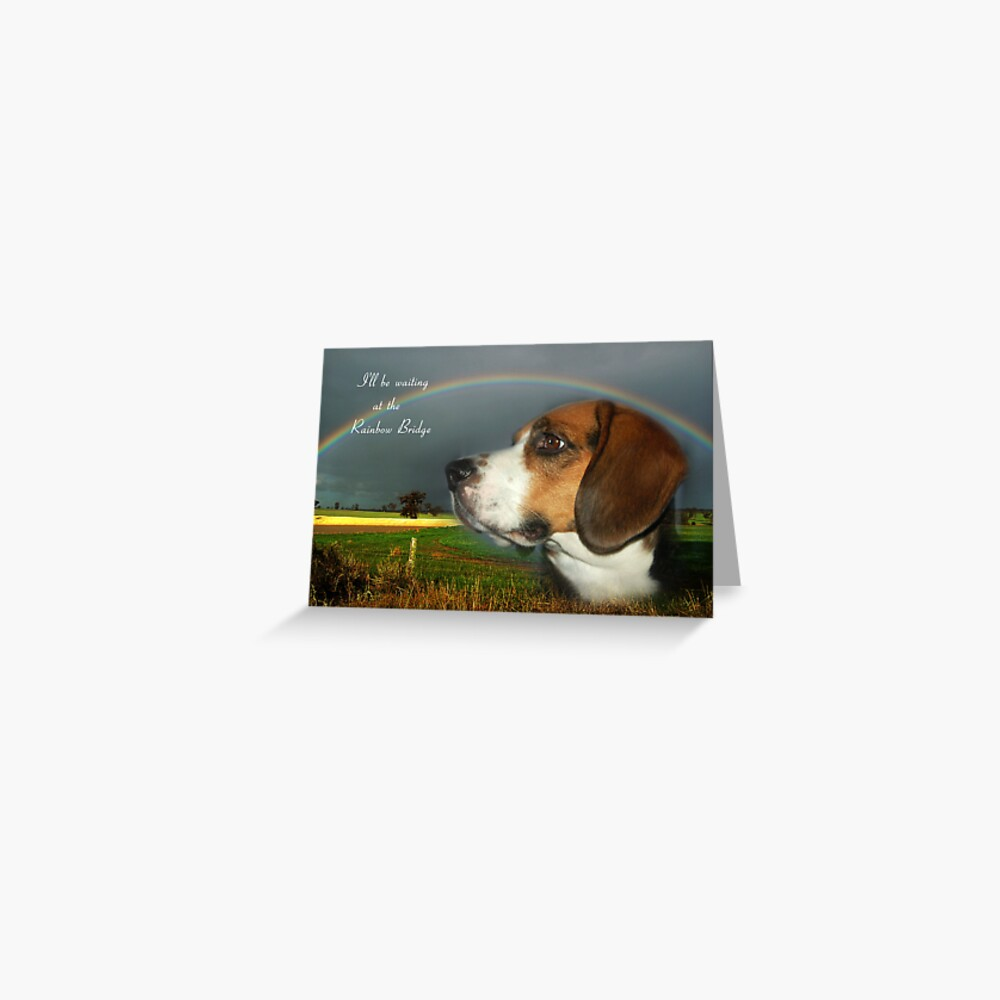 Sympathy Card For Loss Of Pet Greeting Card