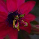 Passion has Purple Tendrils by Adam Burke