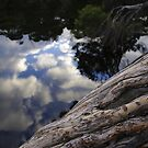 Old Man Tea Tree reflection. by Adam Burke