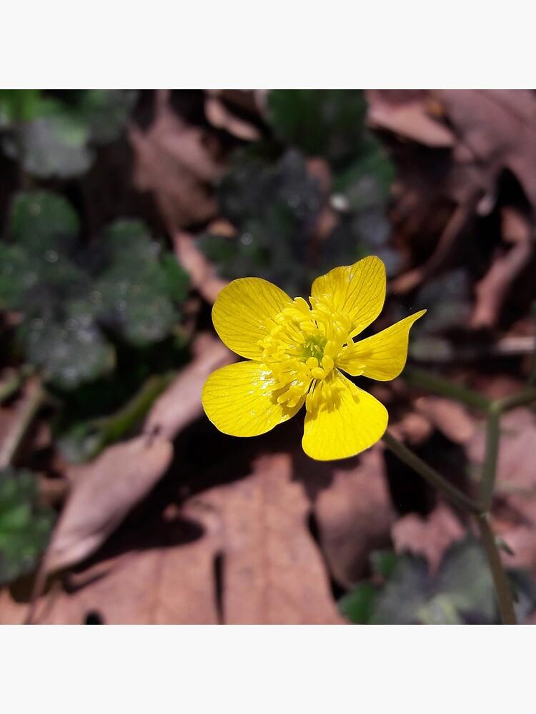 Poyrazlar Yellow Flower by tomeoftrovius