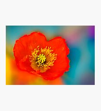 Colour of Life XLI Photographic Print