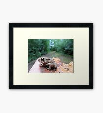 Handsome in the Forest Framed Print