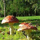 Wild Fungi by Chris Goodwin