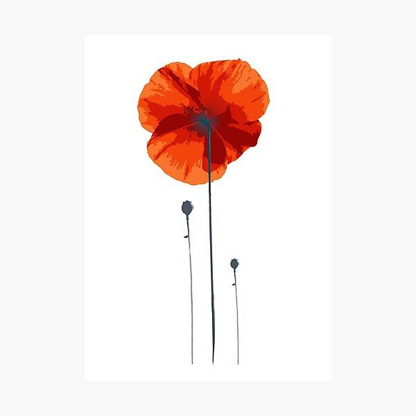 poppy coquelicot Photographic Print