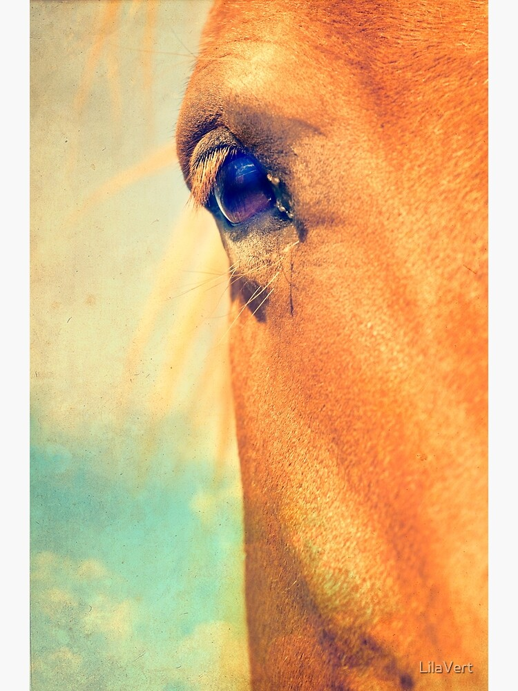 Horse Dreaming by LilaVert