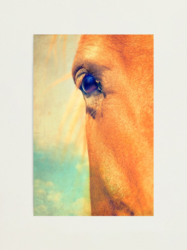 Alternate view of Horse Dreaming Photographic Print
