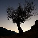 Tree Silhouette at dusk by Ciaran Sidwell