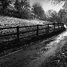 Winter Road by Mark Smart