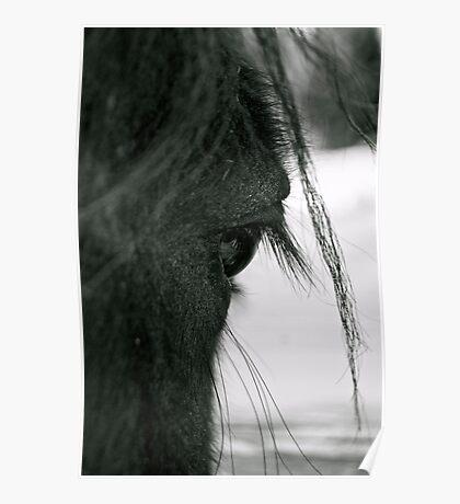"""Eye"" (Horses Eye) Poster"