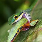 Green Parrot Snake by Robbie Labanowski