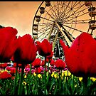 A Feast For The Senses ~ Floriade by Rinaldo Di Battista