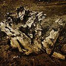 Stump on the Beach by jean-louis bouzou