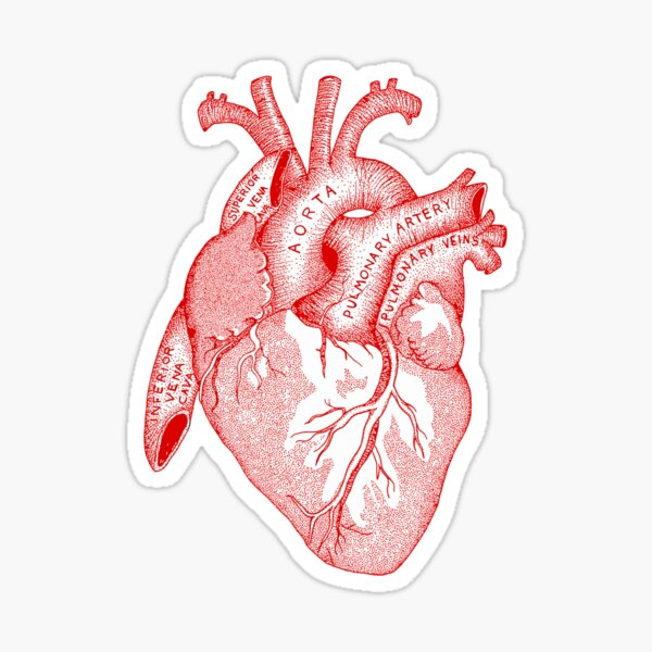 Study of the Heart [red] Sticker