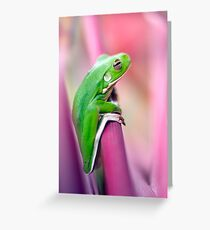 Froggie in the pink Greeting Card