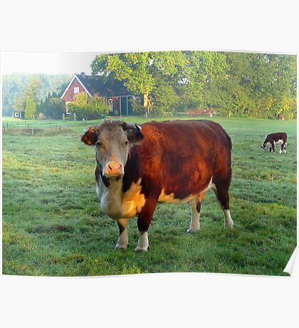 Good morning Cow Poster