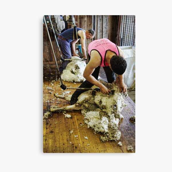CONTRAST OF SHEARING WORLDS Canvas Print