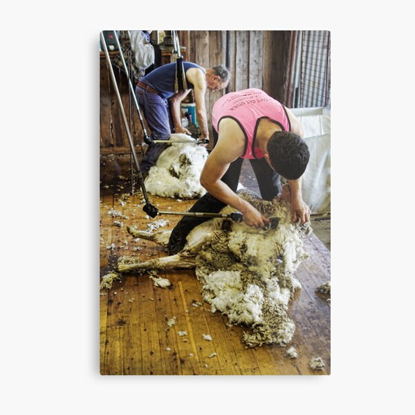 CONTRAST OF SHEARING WORLDS Metal Print