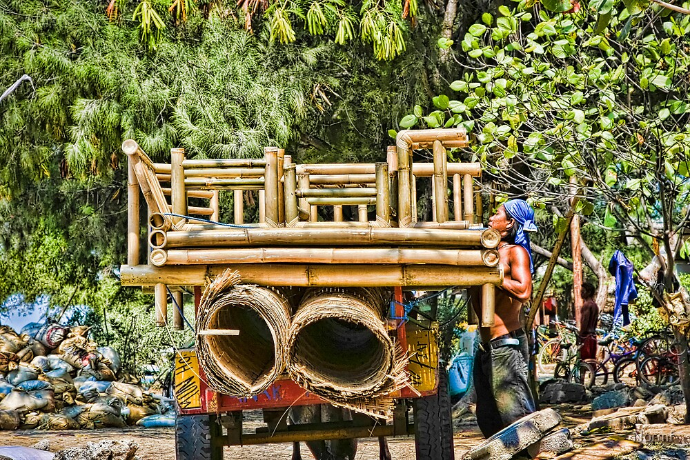 Cidomo horse carts of the Gili Islands 3 by Normf