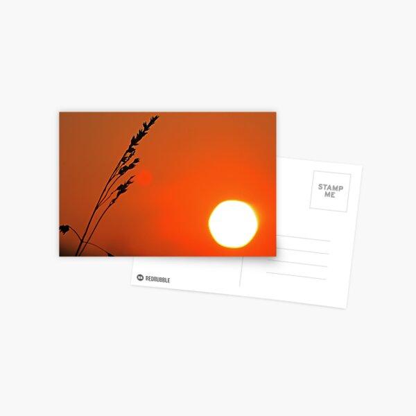 Wild Barley Postcard