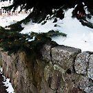 Wildwood Wall by Judi FitzPatrick